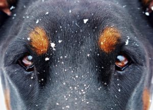dogs-eyes